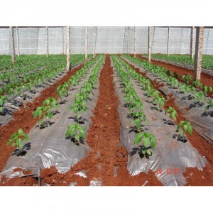 Compostable Agro Mulch Film Roll